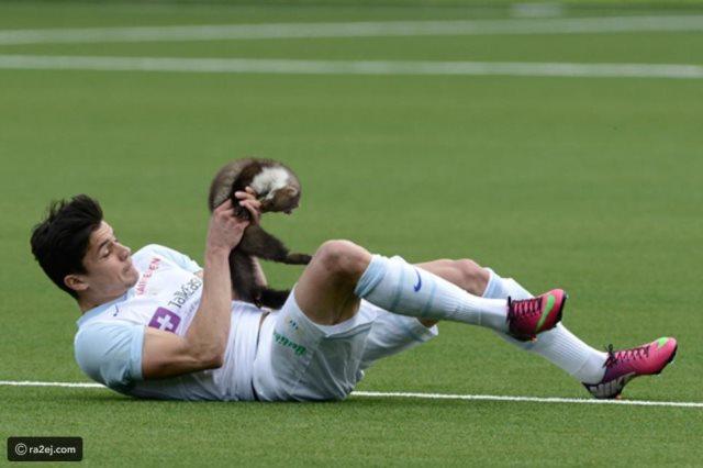 اقتحامات للحيوانات فى ملاعب كرة القدم