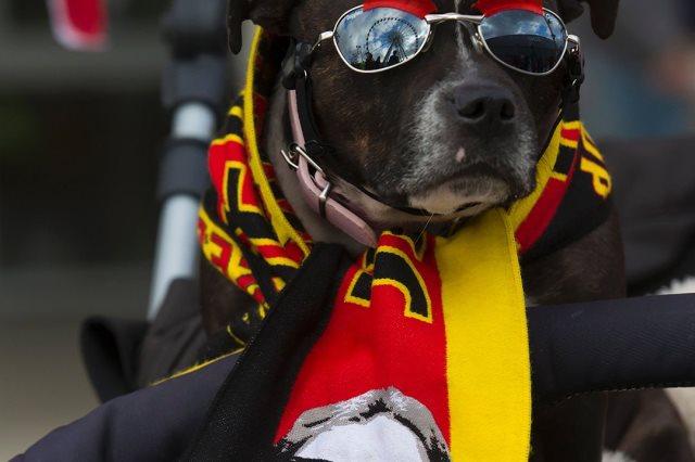 كلاب يرتدون قمصان كبار انجلترا